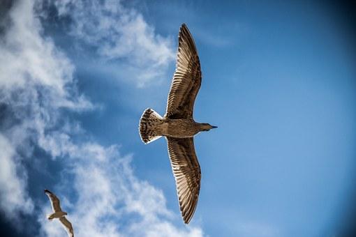 sea-gull-765490__340.jpg