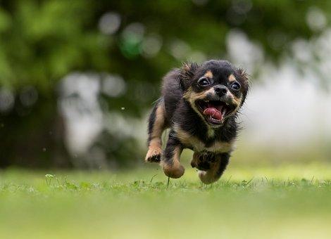 dog-1801419__340